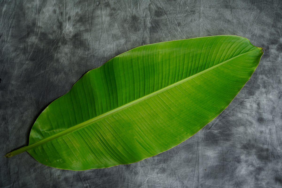 leaf of banana plant-toilet paper alternatives